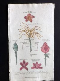 Thornton 1812 Hand Col Botanical Print. Anatomy of the Pontic Rhododendron
